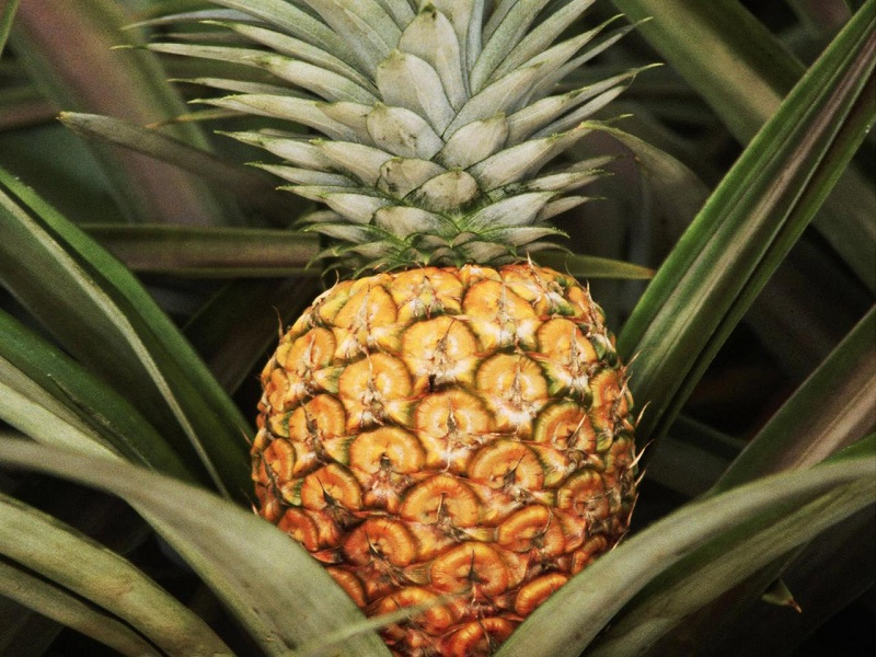 10 Excellent benefits of pineapple for our health