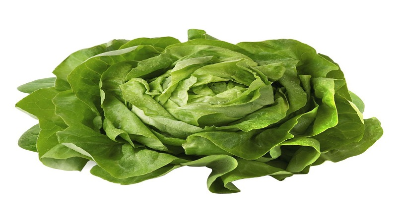 Lettuce relaxing to sleep easily and better