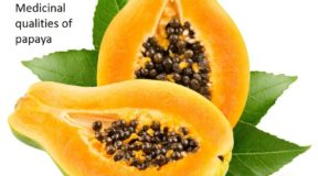 Medicinal qualities of papaya