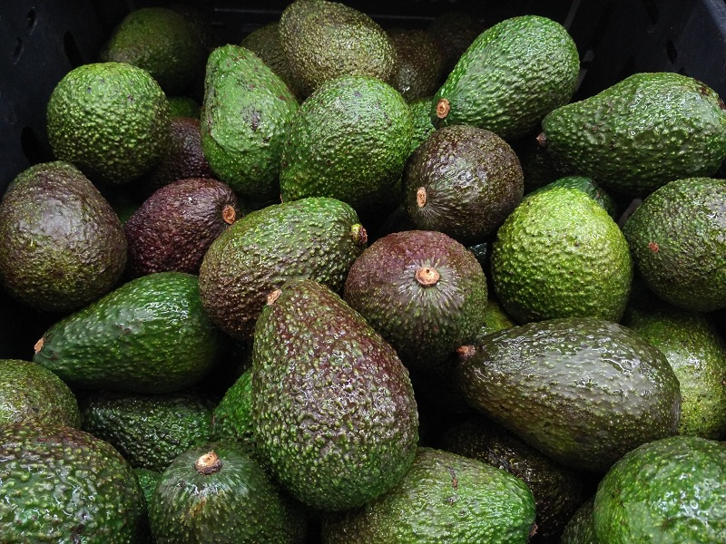 Avocados to improve your memory and focus better
