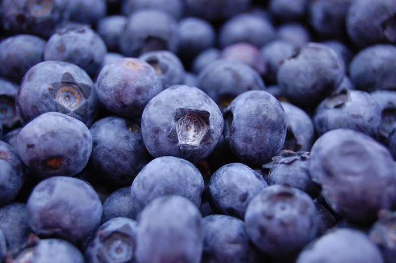 Blueberries to improve your memory and focus better