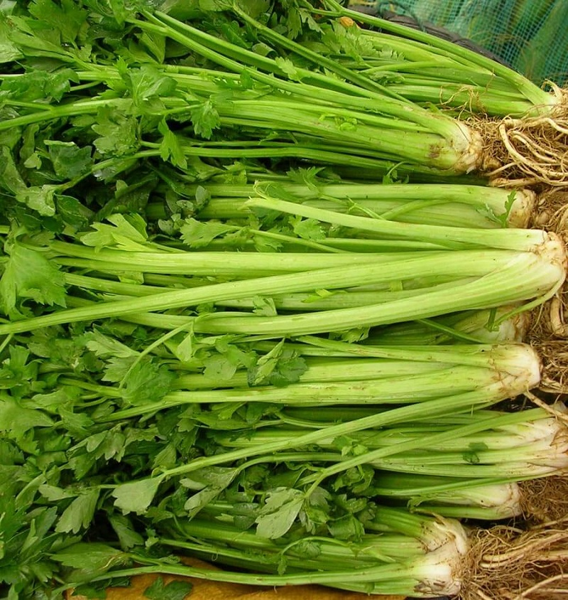 Celery to improve your memory and focus better