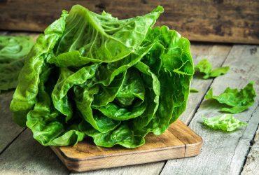 Benefits Of Buttercrunch Lettuce